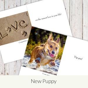 new puppy
