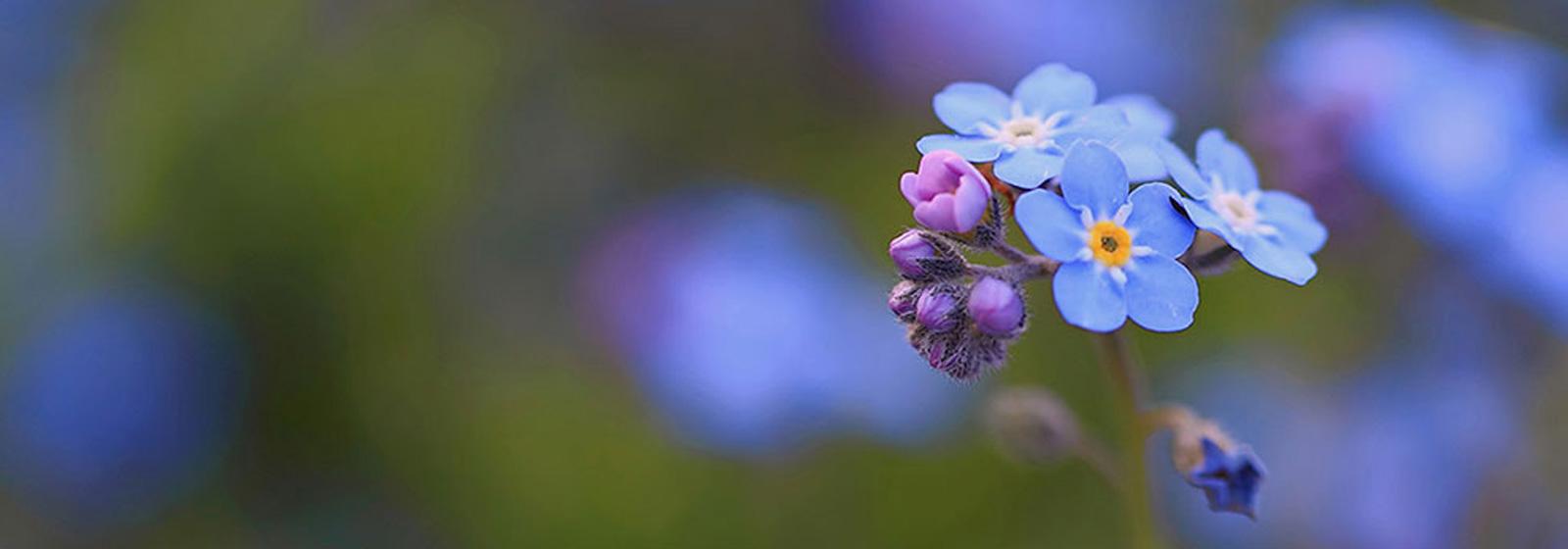 color-full-flower